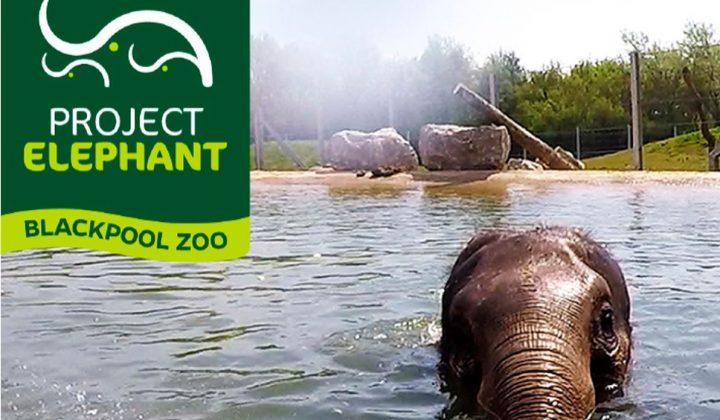 Bobcat Raupenlader überzeugt beim Ausbau des Elefantengeheges im Blackpool-Zoo